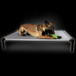The Dog Zone Pro-Training Bed