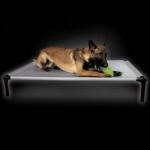 The Dog Zone Pro-Training Bed